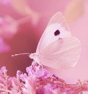 Nemoc motýlích křídel