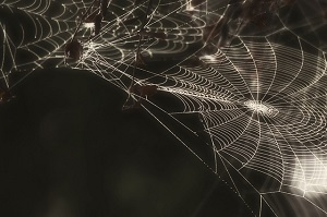 Arachnofobie – strach z pavouků